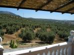 view of the olive groves from the shady balcony
