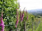 Gwynfan Bungalow views