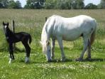 Camargue Horse Stud on site