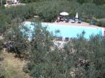 View towards pool midst olive grove