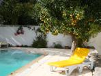 Pool and orange tree in December