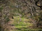 Lon Goed Footpath in Winter