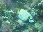 You can see colourful fish when diving, snorkelling or just swimming in the sea