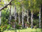 Le jardin avec ses cocotiers et son épais gazon.