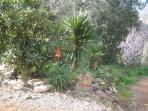 local cactus type plants