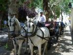 Take a pony and gig ride and see the sites