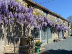 Wisteria growing across the barn at Le Gite Tranquille