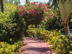 Pathways around the resort planted with hibiscus and bougainvillea