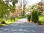 Mature Woodland Gardens