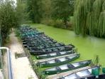 Venice vert