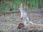 Luxury bush retreat surrounded by native Australian wildlife
