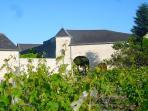 La Porte du Bois, vue des vignes environnantes