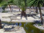 Amazing sights at crocodile park