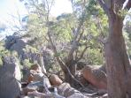 Granite boulders and eucalyptus gum trees at the top of the saddle on the way to Wineglass Bay.