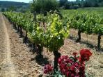 long walks through sunny vineyards