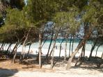 Pine beach