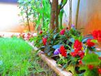 Our precious flowers