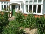 Front garden - fresh organic veg - help yourself!