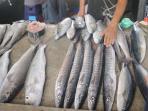 Freshly caught barracuda at Victoria's market