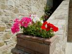 More flowers on sunbaked stones