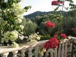 Arazzos garden.