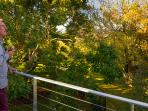 View the established garden from your deck