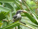 Birdlife in the garden
