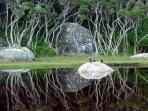 Reflections in Tidal River, Wilsons Prom