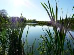 One of our lovely lakes to stroll around