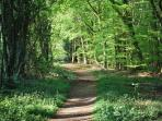 Beautiful Walks just outside the cottages