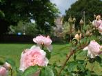 Heady scents of David Austin roses in summer