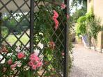Las rosas del templete del jardín