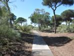 path to the beach, dunes and pines