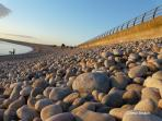 Pebbles - Chesil Beach