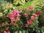 Garden at Somercotes