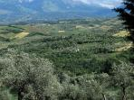 Enjoy the views of Olive Groves for miles