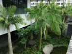 Tropical garden in the complex