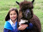 Friendly farmyard animals