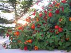 Floral displays around the Garden