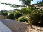 Established Garden to the Front with Olive tree and Shrubs