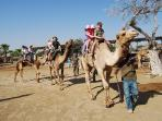 Ride the Camels at the Mazotos Camel Park