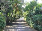 Frangipani Lane