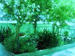 giardino in notturna con arbusti ed erbe aromatiche