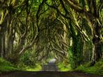Dark Hedges (Game of Thrones) only 5 mins. away.