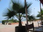 gruissan palms