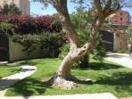 particolari del giardino esterno alla villa