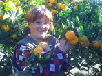 picking tangerines in autunm