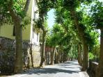 Platan alley towards the center