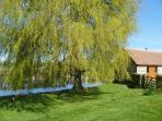 The willow tree and pond