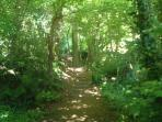 St Anne's Wood (50 yards from The Firs)